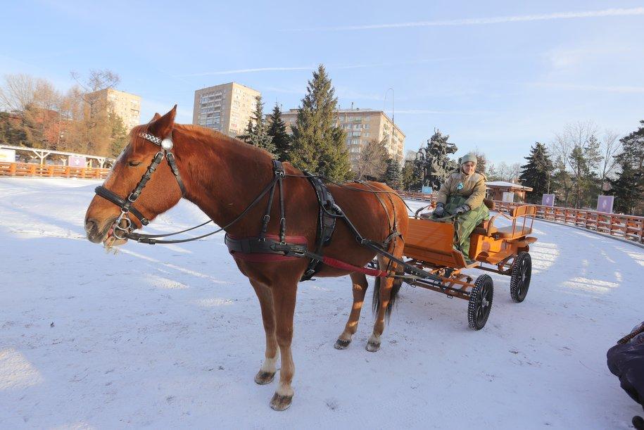 В Московском зоопарке стартовала акция по сбору новогодних подарков для животных