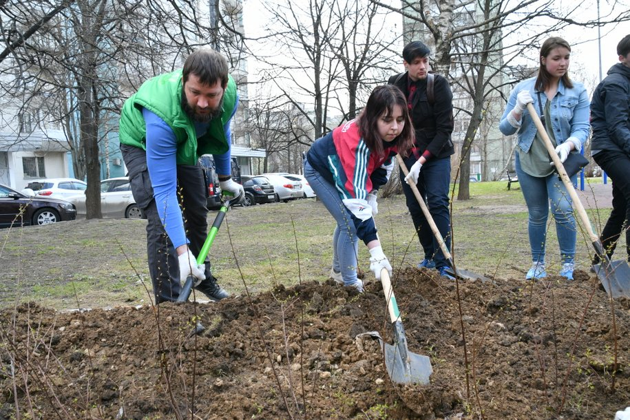 За 10 лет в Москве высадили около 800 тысяч деревьев