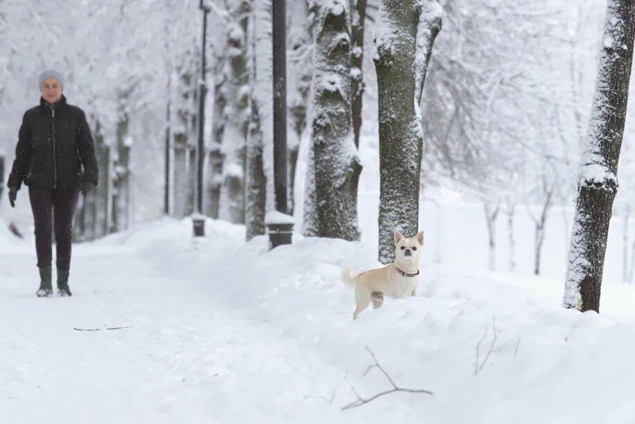 Москвичей предупредили о похолодании и снегопадах