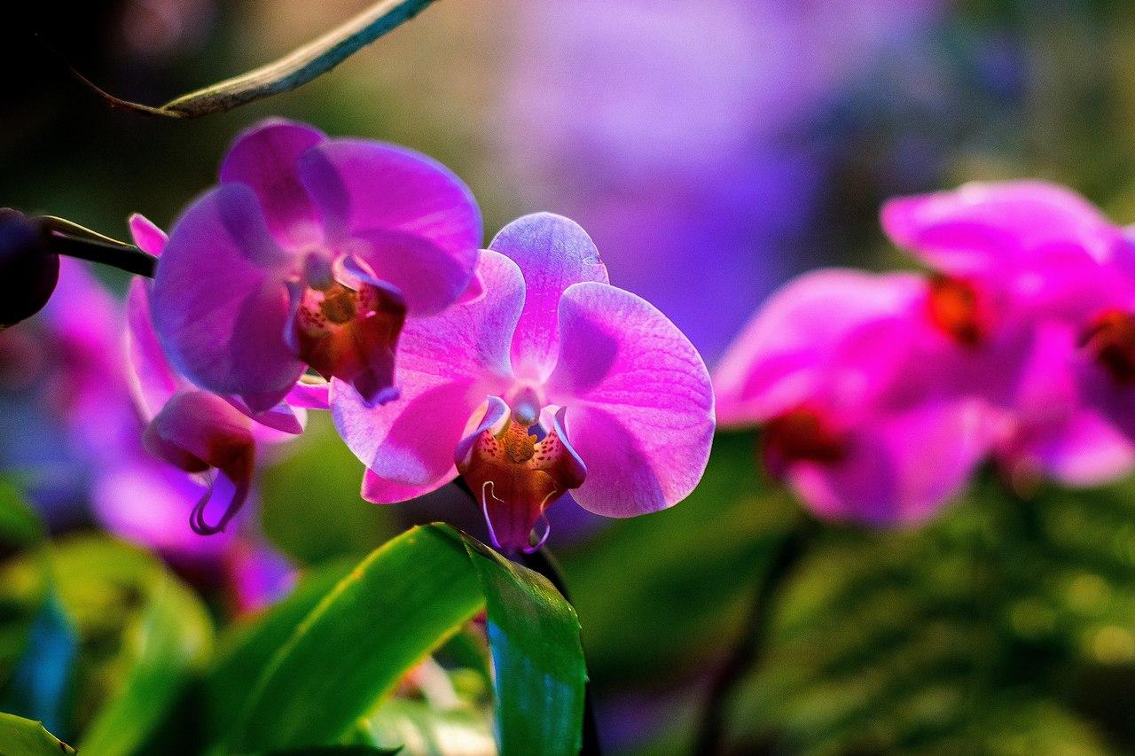 В «Аптекарском огороде» до апреля будет проходить фестиваль орхидей