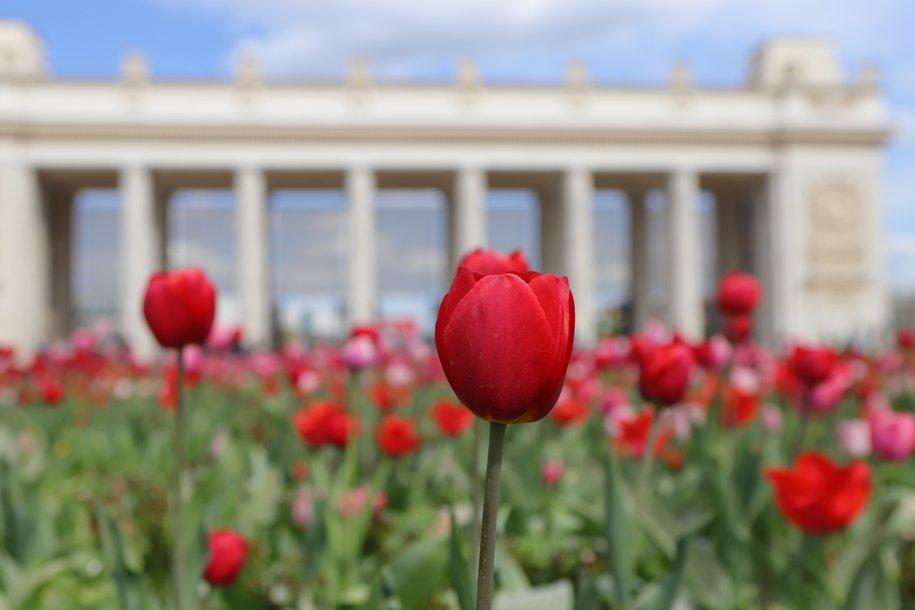 Около 54 млн цветов украсит Москву в этом году